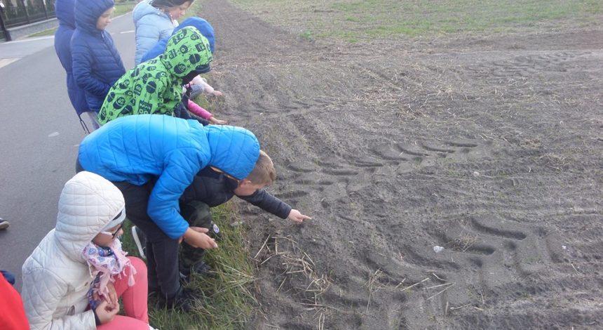 W poszukiwaniu ozimin i roślin okopowych